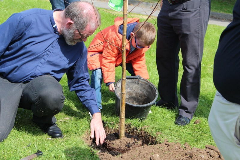 Surrounding the sapling with good soil